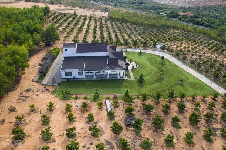 Bán đất nông nghiệp tại Bình Thuận giá chỉ 60tr/1.000 m2